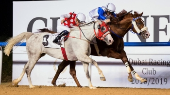 AL ASAYL STALLIONS SHINE IN MEYDAN ON 22/11/18