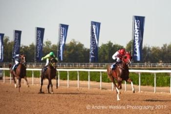 BARIZ!! First winner for AL ASAYL's multiple GR 1 winning Stallion SERAPHIN DU PAON!