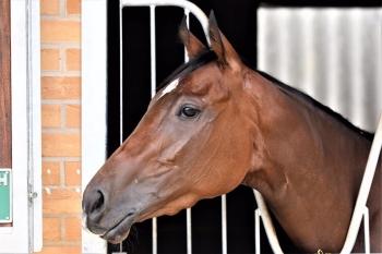 Superb win for AL ASAYL's homebred filly