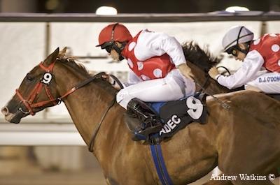 Arabians / El-malak-el-waheed